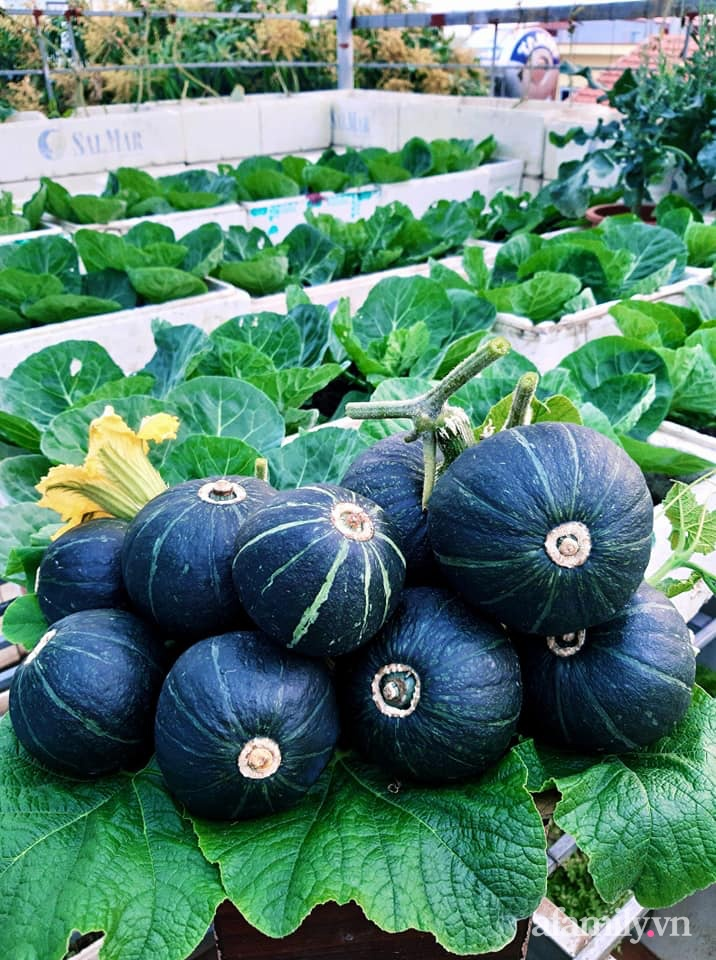 Cả năm không phải đi chợ mua rau quả nhờ làm vườn trên nóc nhà của mẹ đảm Hà Nội-12