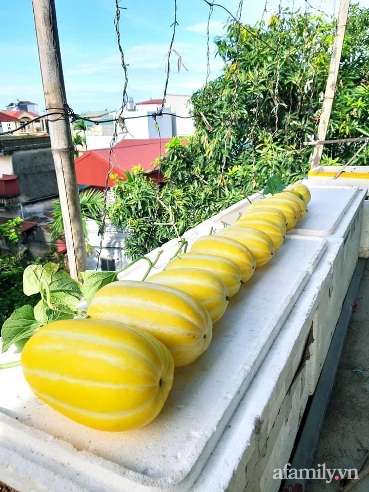 Cả năm không phải đi chợ mua rau quả nhờ làm vườn trên nóc nhà của mẹ đảm Hà Nội-14