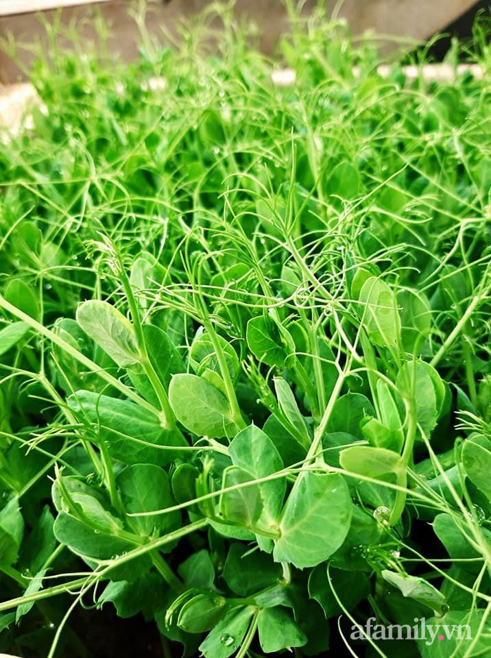 Cả năm không phải đi chợ mua rau quả nhờ làm vườn trên nóc nhà của mẹ đảm Hà Nội-15