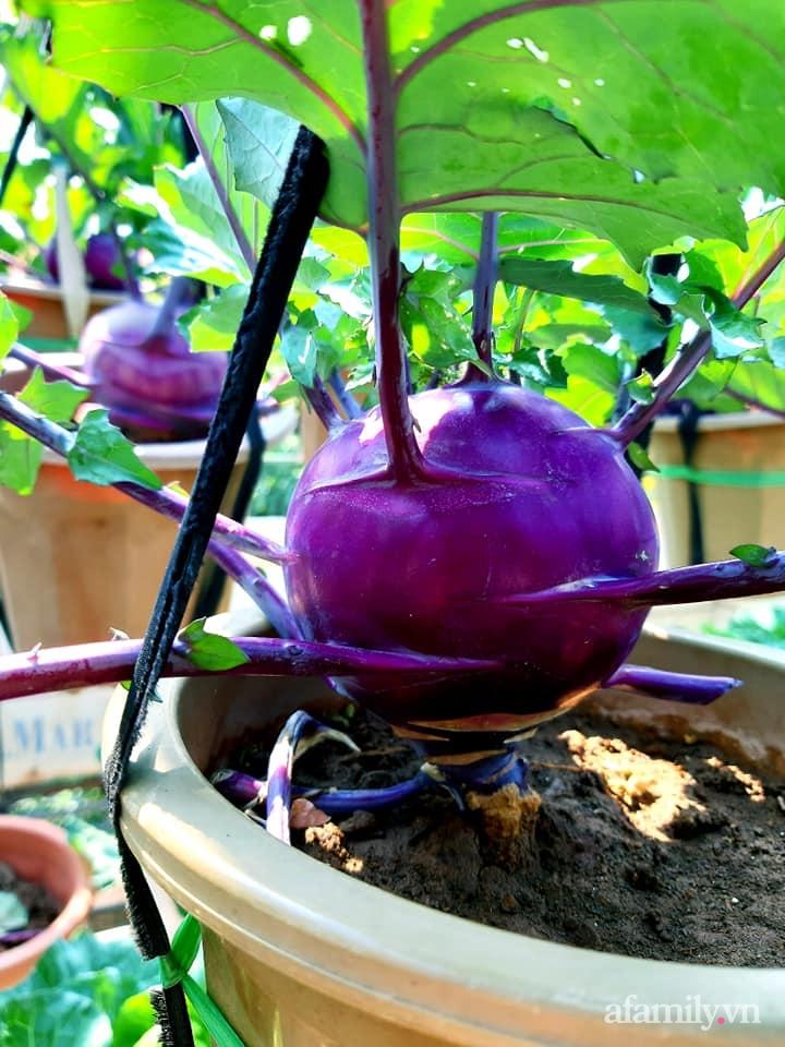 Cả năm không phải đi chợ mua rau quả nhờ làm vườn trên nóc nhà của mẹ đảm Hà Nội-16