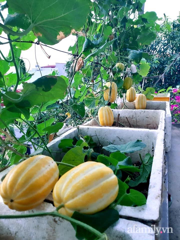 Cả năm không phải đi chợ mua rau quả nhờ làm vườn trên nóc nhà của mẹ đảm Hà Nội-17