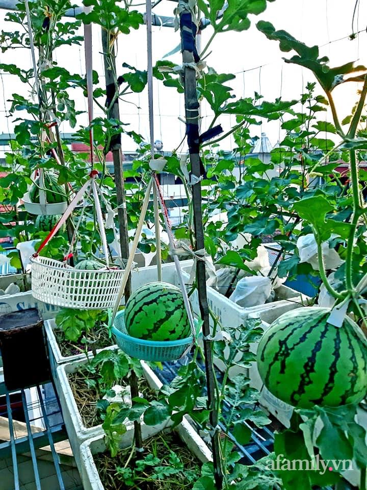 Cả năm không phải đi chợ mua rau quả nhờ làm vườn trên nóc nhà của mẹ đảm Hà Nội-8