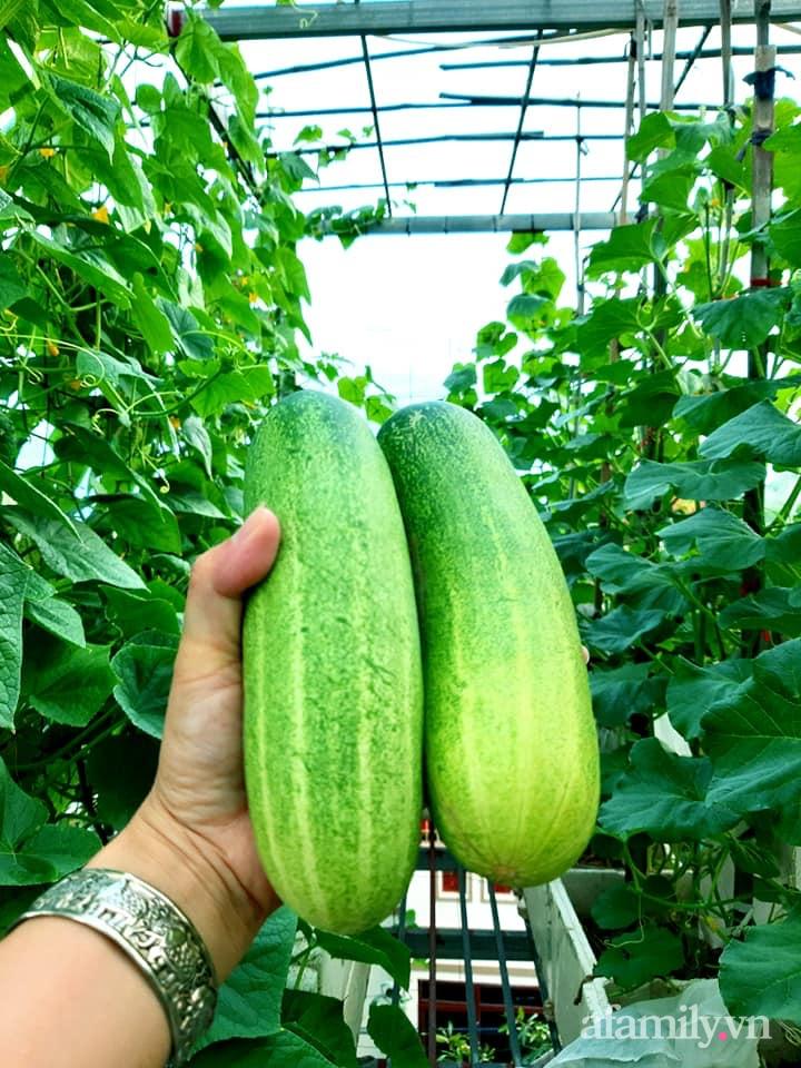 Cả năm không phải đi chợ mua rau quả nhờ làm vườn trên nóc nhà của mẹ đảm Hà Nội-19