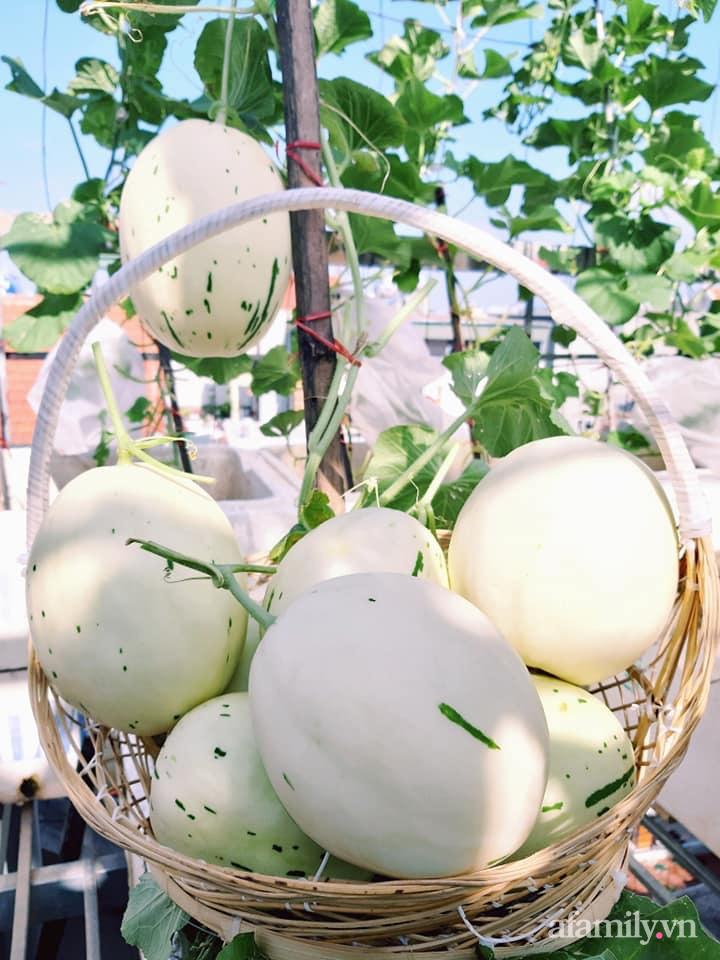 Cả năm không phải đi chợ mua rau quả nhờ làm vườn trên nóc nhà của mẹ đảm Hà Nội-21