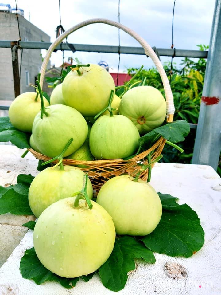 Cả năm không phải đi chợ mua rau quả nhờ làm vườn trên nóc nhà của mẹ đảm Hà Nội-22