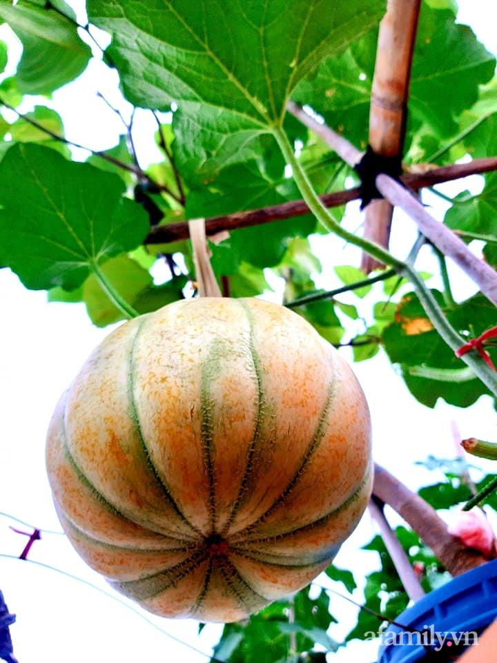 Cả năm không phải đi chợ mua rau quả nhờ làm vườn trên nóc nhà của mẹ đảm Hà Nội-23
