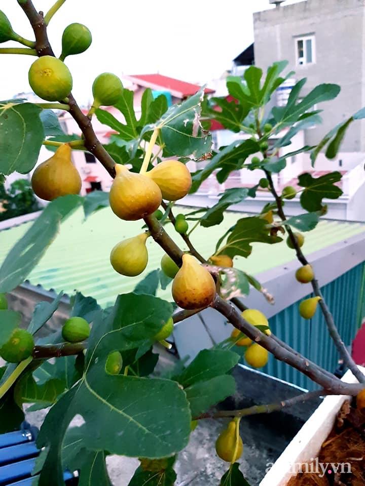 Cả năm không phải đi chợ mua rau quả nhờ làm vườn trên nóc nhà của mẹ đảm Hà Nội-24