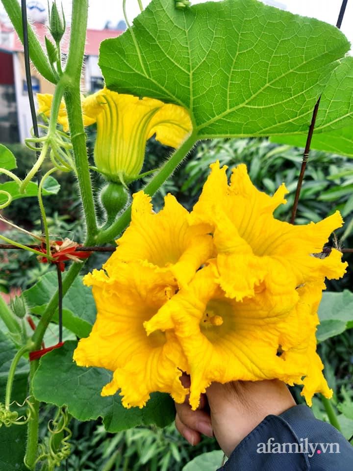 Cả năm không phải đi chợ mua rau quả nhờ làm vườn trên nóc nhà của mẹ đảm Hà Nội-25