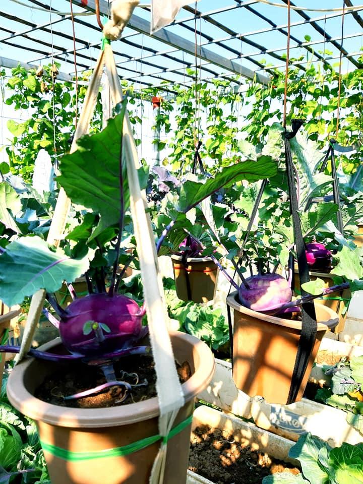 Cả năm không phải đi chợ mua rau quả nhờ làm vườn trên nóc nhà của mẹ đảm Hà Nội-27