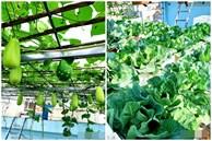 Cả năm không phải đi chợ mua rau quả nhờ làm vườn trên nóc nhà của mẹ đảm Hà Nội