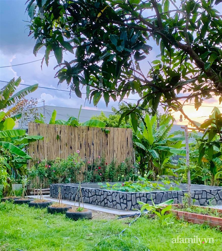 Cả gia đình may mắn có thể sống an yên giữa dịch nhờ ao cá, vườn cây xanh mát ở Bạc Liêu-3