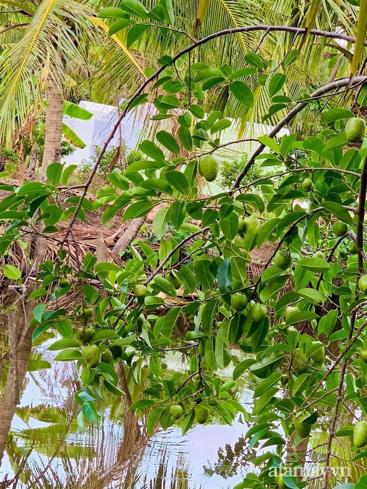 Cả gia đình may mắn có thể sống an yên giữa dịch nhờ ao cá, vườn cây xanh mát ở Bạc Liêu-8