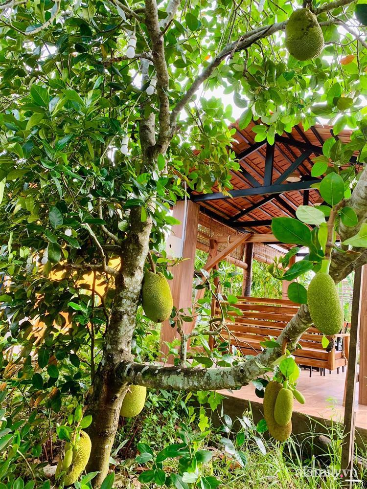 Cả gia đình may mắn có thể sống an yên giữa dịch nhờ ao cá, vườn cây xanh mát ở Bạc Liêu-9