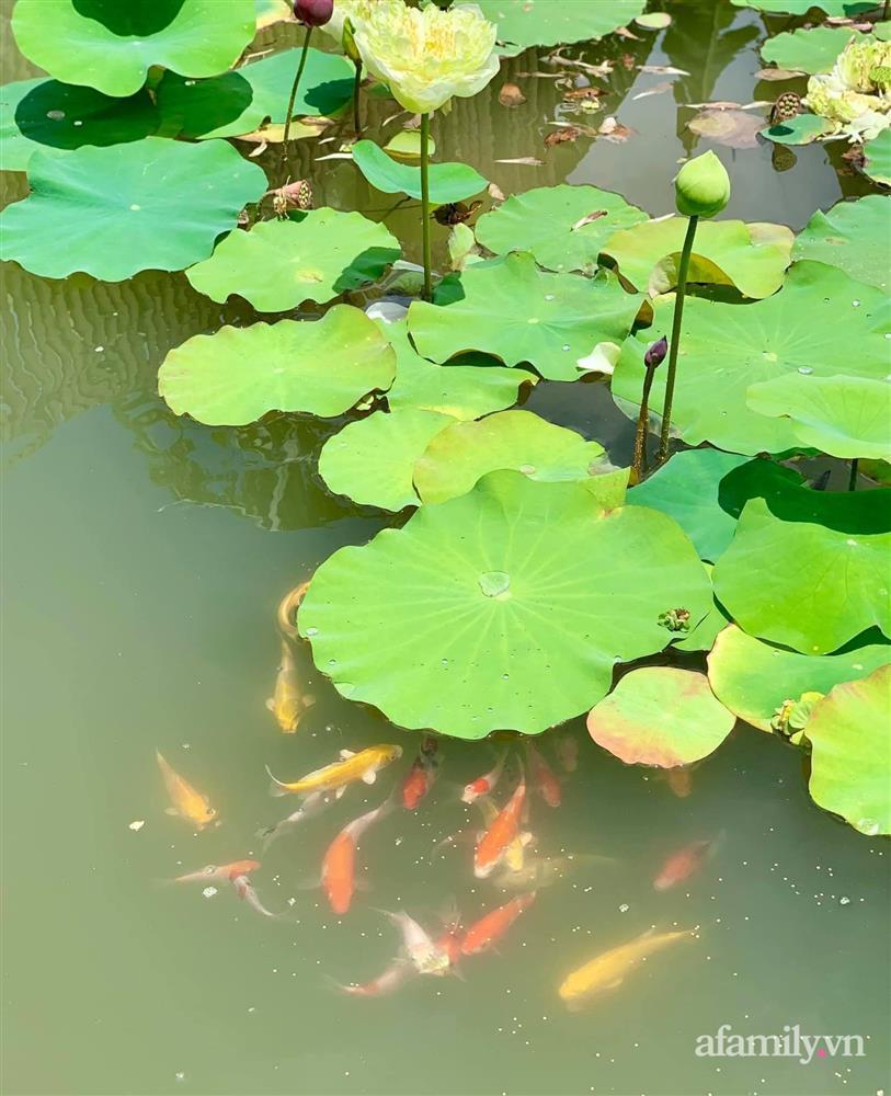 Cả gia đình may mắn có thể sống an yên giữa dịch nhờ ao cá, vườn cây xanh mát ở Bạc Liêu-25