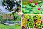 Cả gia đình may mắn có thể sống an yên giữa dịch nhờ ao cá, vườn cây xanh mát ở Bạc Liêu