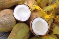 Loại dừa giá lên tới 300.000 đồng/quả có gì đặc biệt?