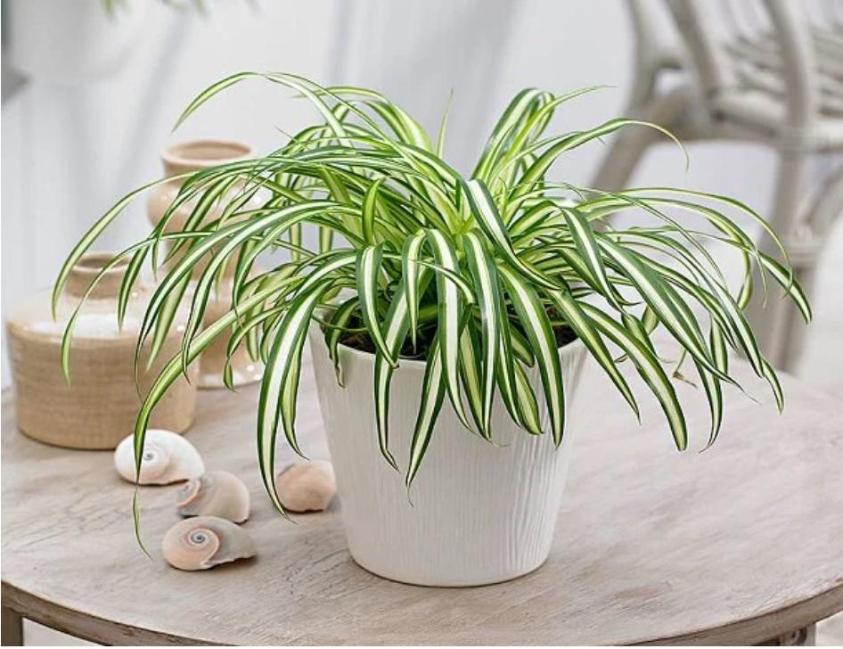 6 loại cây phong thủy trồng trong nhà hút sạch chất độc hại, nâng cao sức khỏe-1