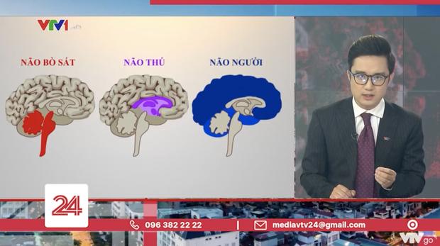 Tranh cãi BTV của VTV ví von não người - não thú để cà khịa những trường hợp vi phạm quy định giãn cách-3