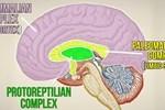 3 cấp độ não người là giả thuyết sai lầm