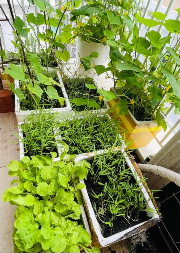 Vườn rau mướt mắttrong biệt thự củaThân Thúy Hà gì cũng có, ngày dịch sẵn thực phẩm xanh tại gia ai cũng thèm-3
