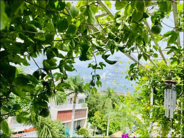 Vườn rau mướt mắttrong biệt thự củaThân Thúy Hà gì cũng có, ngày dịch sẵn thực phẩm xanh tại gia ai cũng thèm-5