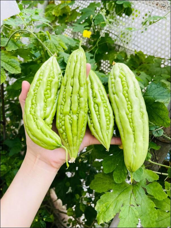 Vườn rau mướt mắttrong biệt thự củaThân Thúy Hà gì cũng có, ngày dịch sẵn thực phẩm xanh tại gia ai cũng thèm-8