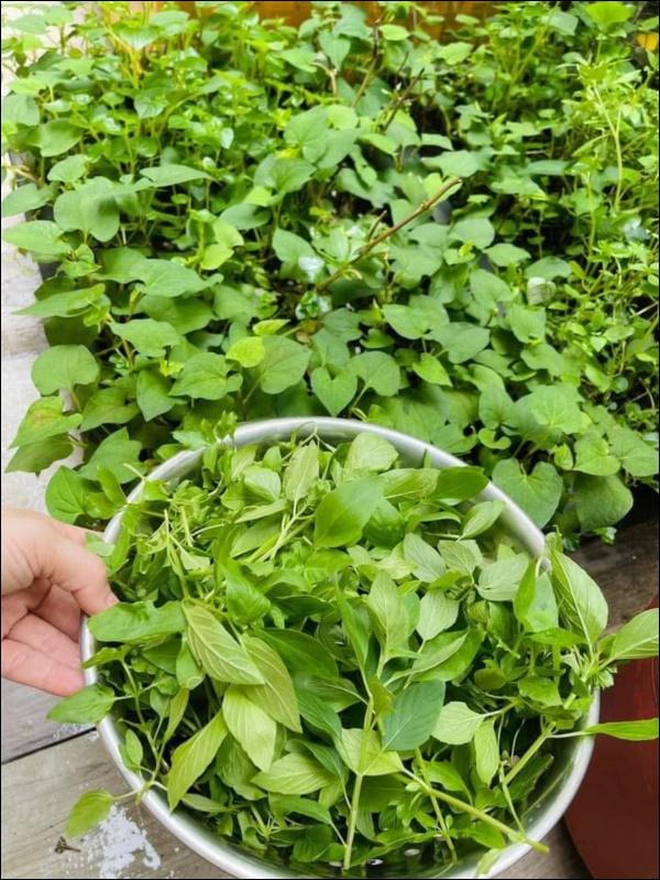 Vườn rau mướt mắttrong biệt thự củaThân Thúy Hà gì cũng có, ngày dịch sẵn thực phẩm xanh tại gia ai cũng thèm-15