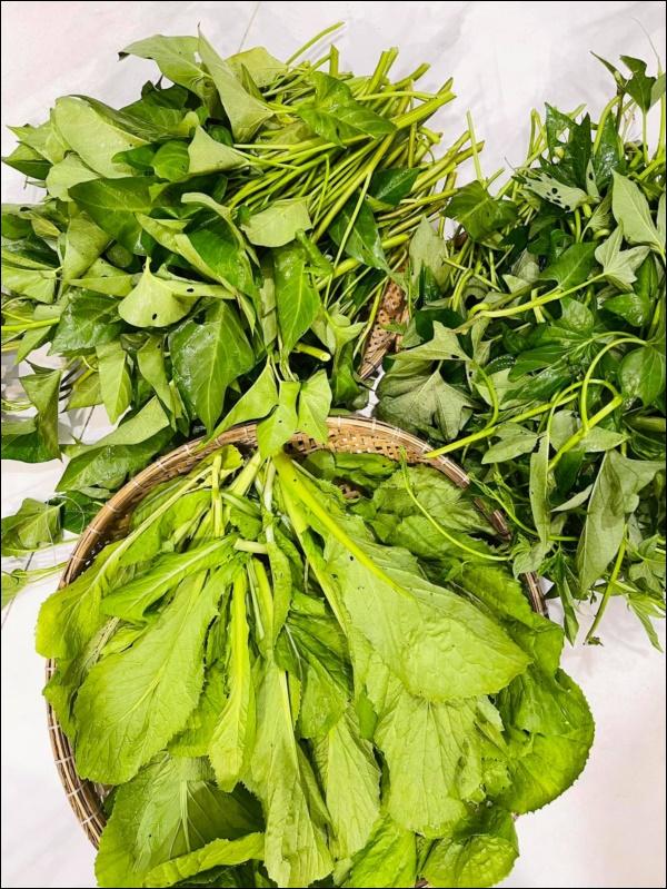 Vườn rau mướt mắttrong biệt thự củaThân Thúy Hà gì cũng có, ngày dịch sẵn thực phẩm xanh tại gia ai cũng thèm-14