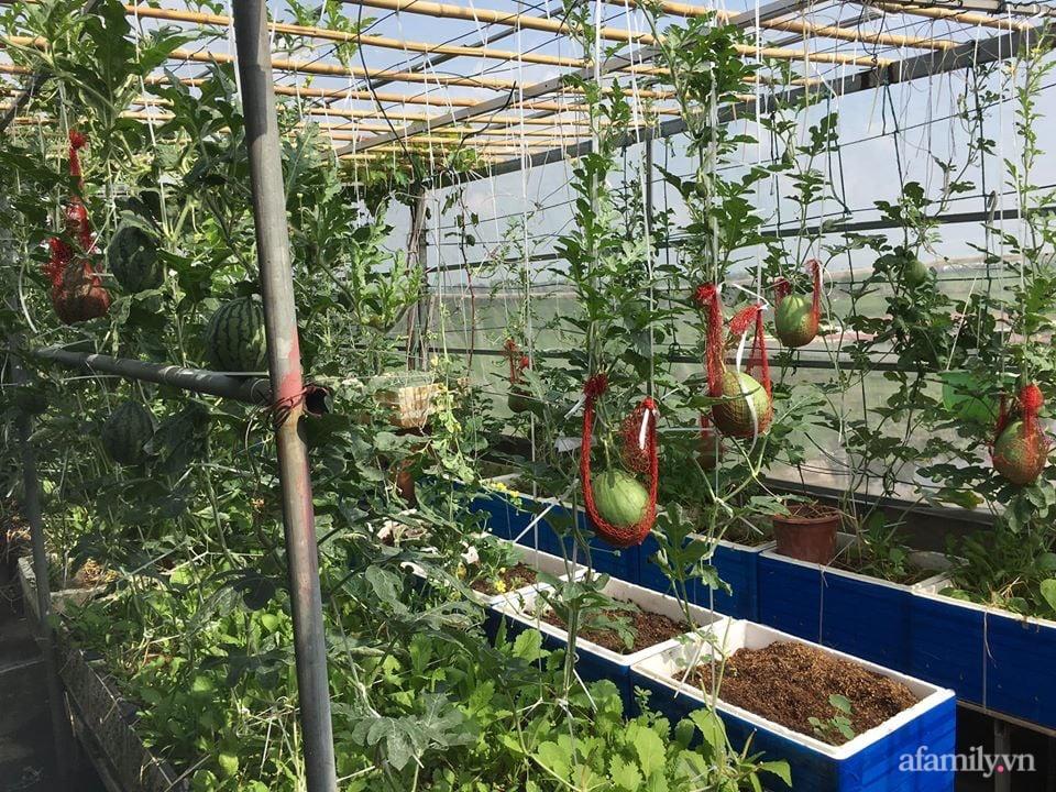 Sở hữu sân thượng đủ loại rau và trái cây sạch, mẹ trẻ yên tâm cùng gia đình đi qua mùa dịch ở Thái Bình-2