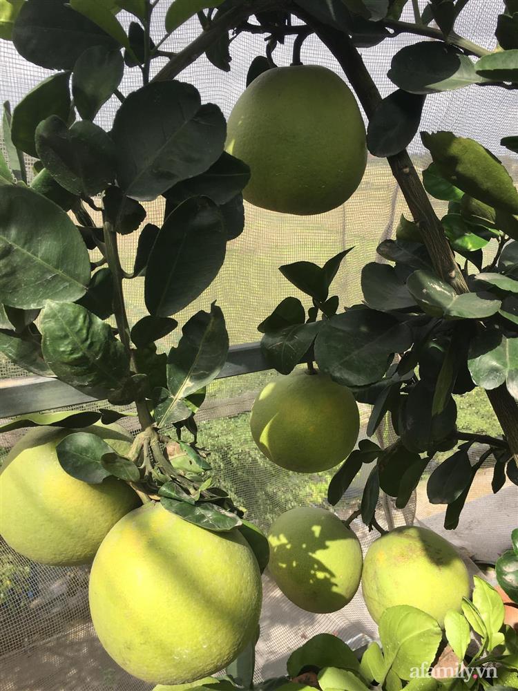 Sở hữu sân thượng đủ loại rau và trái cây sạch, mẹ trẻ yên tâm cùng gia đình đi qua mùa dịch ở Thái Bình-5