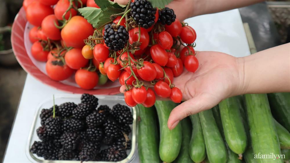 Sở hữu sân thượng đủ loại rau và trái cây sạch, mẹ trẻ yên tâm cùng gia đình đi qua mùa dịch ở Thái Bình-9