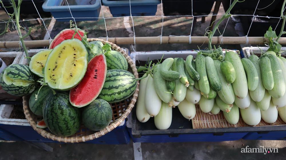 Sở hữu sân thượng đủ loại rau và trái cây sạch, mẹ trẻ yên tâm cùng gia đình đi qua mùa dịch ở Thái Bình-10