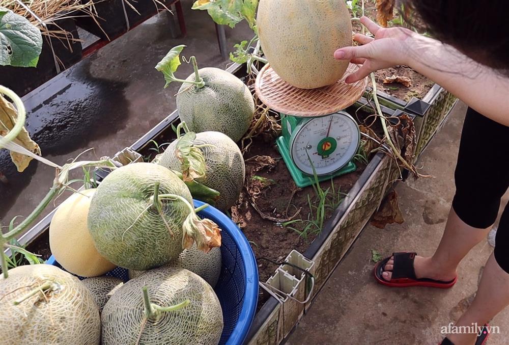 Sở hữu sân thượng đủ loại rau và trái cây sạch, mẹ trẻ yên tâm cùng gia đình đi qua mùa dịch ở Thái Bình-11