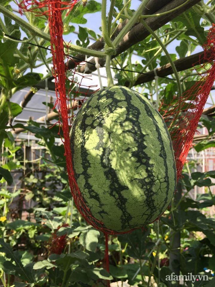Sở hữu sân thượng đủ loại rau và trái cây sạch, mẹ trẻ yên tâm cùng gia đình đi qua mùa dịch ở Thái Bình-13