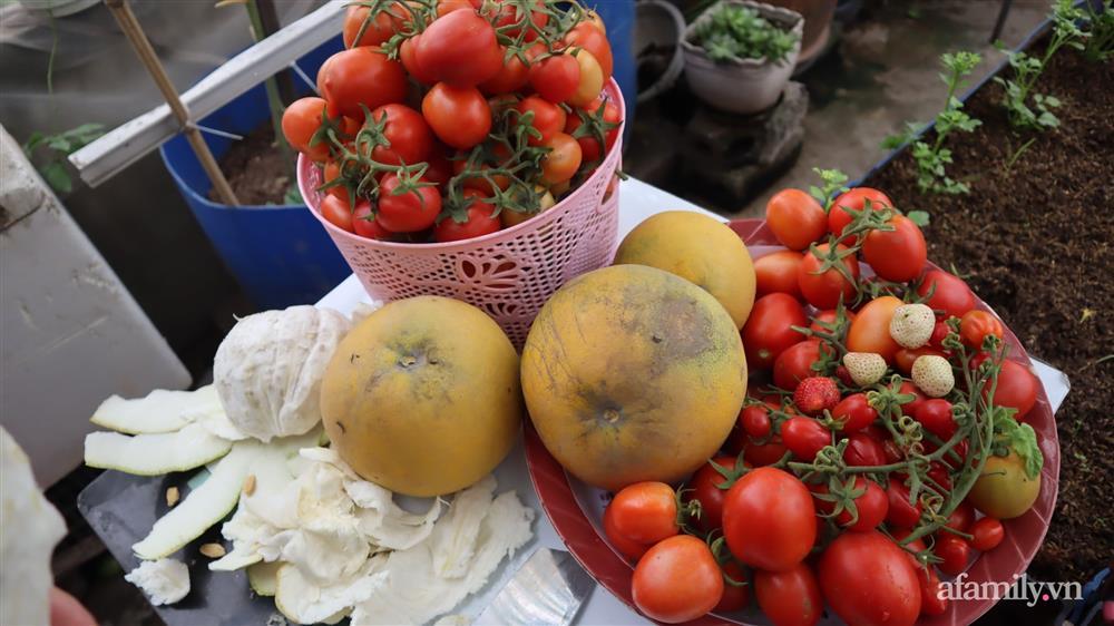 Sở hữu sân thượng đủ loại rau và trái cây sạch, mẹ trẻ yên tâm cùng gia đình đi qua mùa dịch ở Thái Bình-7