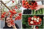 Sở hữu sân thượng đủ loại rau và trái cây sạch, mẹ trẻ yên tâm cùng gia đình 'đi qua mùa dịch' ở Thái Bình