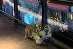 Xúc động cảnh nhiều người Việt tại Nhật đến đặt hoa tưởng niệm ở vị trí nam du học sinh bị đánh đập, rơi xuống nước dẫn đến tử vong