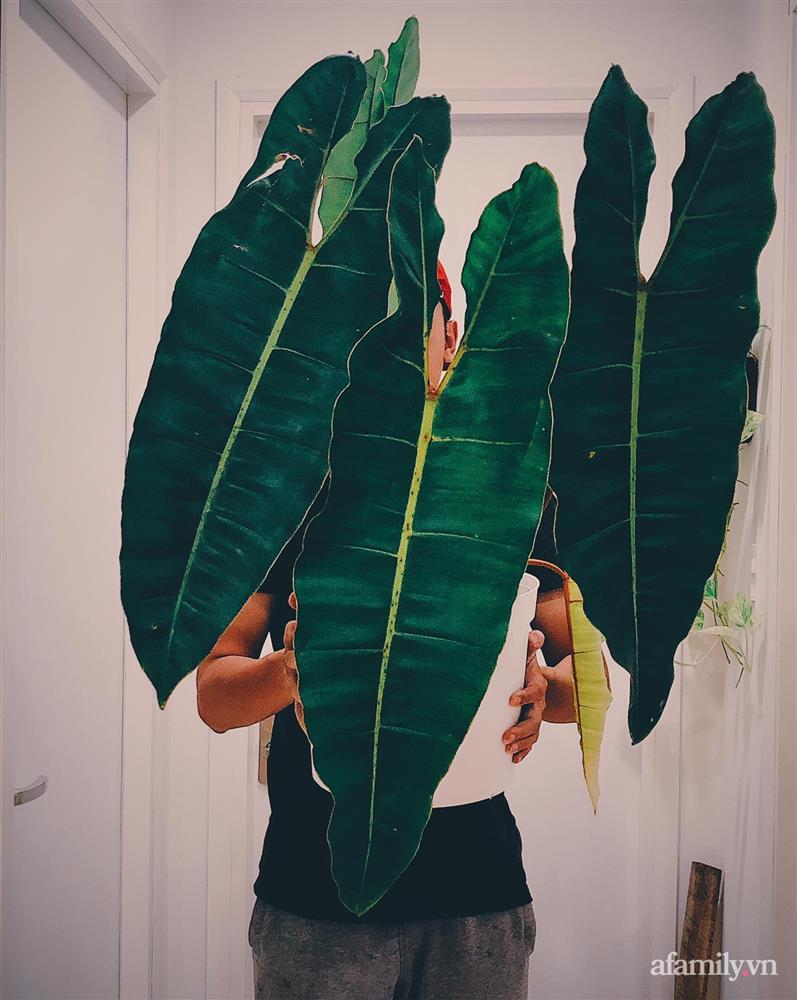 Căn hộ trên tầng cao xanh mát ấn tượng với đủ loại cây nhiệt đới của chàng trai Sài Gòn-13