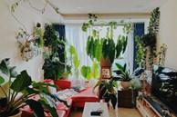 Căn hộ trên tầng cao xanh mát ấn tượng với đủ loại cây nhiệt đới của chàng trai Sài Gòn