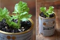 Mua rau gia vị về đừng vứt rễ đi, trồng theo cách này siêu đơn giản, ăn thoải mái, hết lại tự lên