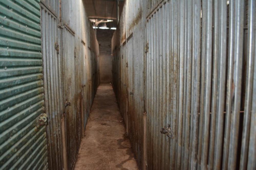 Vụ nuôi nhốt 17 con hổ trong nhà như nuôi heo: Chủ nhà xây tầng hầm rộng cả trăm mét để tránh bị phát hiện-3