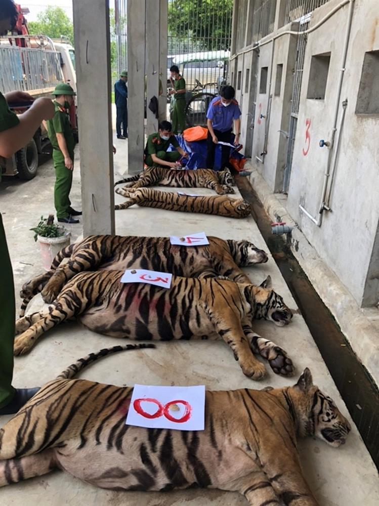 Vụ nuôi nhốt 17 con hổ trong nhà như nuôi heo: Chủ nhà xây tầng hầm rộng cả trăm mét để tránh bị phát hiện-5