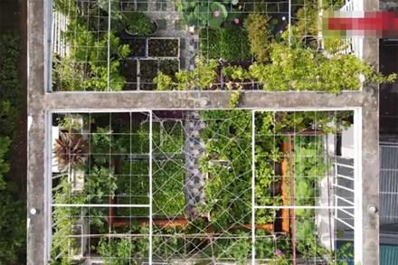 Video: Mãn nhãn vườn rau xanh theo mùa trên sân thượng nhà 5 tầng ở Hà Nội