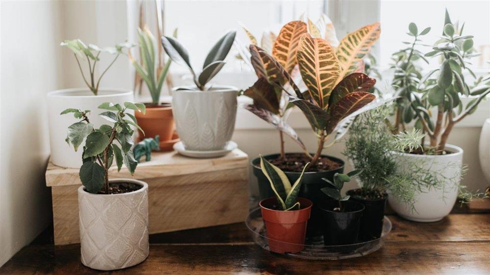 Điểm danh 7 loại cây cảnh cực dễ chăm dành cho người mới trồng-1
