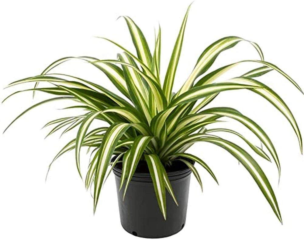 Điểm danh 7 loại cây cảnh cực dễ chăm dành cho người mới trồng-4