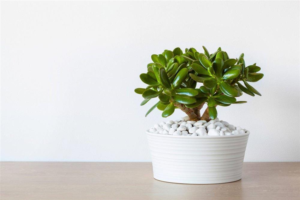 Điểm danh 7 loại cây cảnh cực dễ chăm dành cho người mới trồng-7