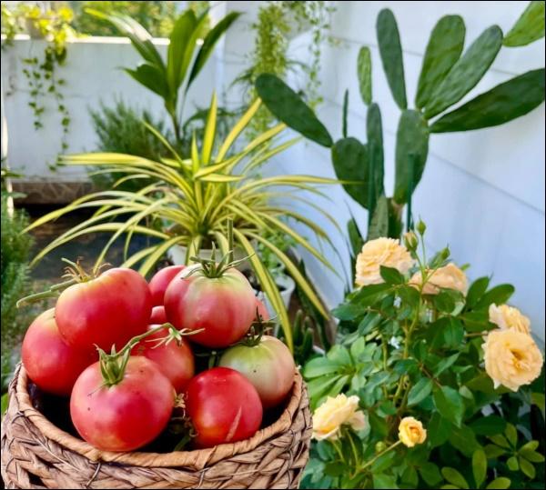 Khu vườn trongbiệt thự 21 tỷ của MCQuyềnLinh mùa dịch gìcũng có: Rau xanh, hoa tươi, trái cây đều xum xuê-7