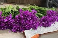 Nông dân trồng hoa Hà Nội 'muốn khóc' khi hoa tươi chưa đến 500 đồng/bông