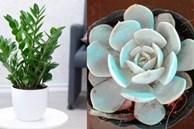 5 loại cây phong thủy trồng trong nhà giúp mang đến tài lộc, bình an cho cả gia đình