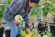 Vườn rau trên sân thượng quá 'đỉnh' khiến dân tình nức nở ước ao, đủ loại rau củ đề huề chẳng thua gì siêu thị